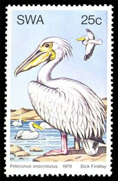 Gondwana Collection: Stamps 13-05-21 pelicans