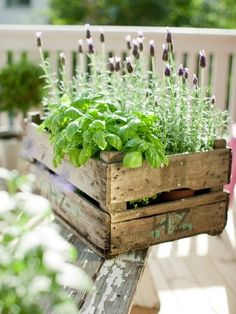potted herbs in a crate