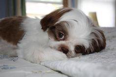 puppy Charlie!