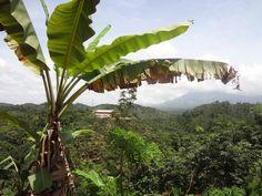 A Look Inside Wayanad #India #Nature #Profugo #InternationalDevelopment #Nonprofit #Beautiful