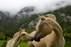 Horses in Hardanger by Kristoffer Fure Johansen on Flickr.