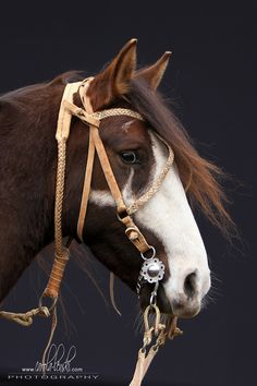 Criollo. Such a pretty paint horse, beautiful white markings on his face. I have never seen a Bridle like that cross over the forehead.