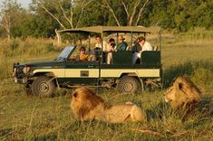I want to go on a real African safari so I can see big cats in the wild.