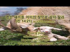 [신명기] 염소 새끼를 그 어미의 젖에 삶지 말라 (신 14:21) by 뉴저지 Jesus Lover
