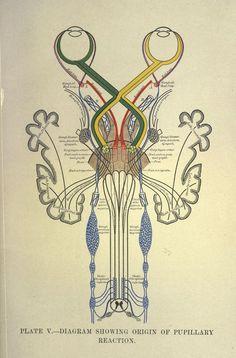 El funcionamiento ocular según un diagrama de 1904