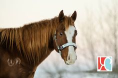 Simply Famous Horses, Photography, Animals, Photograph, Animaux, Photography Business, Horse, Photoshoot, Animal