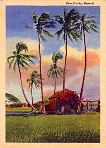 Vintage Hawaiian Landscape with Hut and Palm Trees Postcard.  I want to go back to my little grass shack in Hawaii!