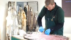 Warm weather leading to worst Yukon trapping season in years