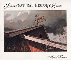 1967 --  Barns Natural History of Barns by Eric Sloane.  Exquisite line drawings.  Lovely condition.  Free US insurance. http://www.etsy.com/shop/MoxyFoxBooks