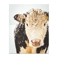 French Country Farm Cows Winter Art By ShadetreePhotography