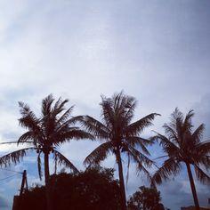 看到椰子樹,就想到海邊。
