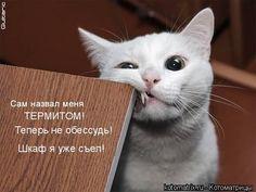 прикольные картинки: 47 тыс изображений найдено в Яндекс.Картинках