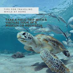 #traveltips, #virtualvacation Virtual Tour, Live Life, Travel Inspiration, Travel Tips, Tours, Vacation, Places, Vacations, Travel Advice