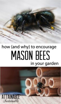Get to Know Native Mason Bees