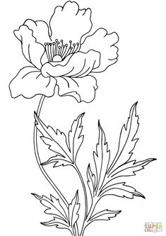 Poppy Coloring page Flower Coloring Pages, Colouring Pages, Coloring Books, Art Drawings Sketches, Easy Drawings, Watercolor Flowers, Watercolor Art, Beautiful Flower Drawings, Embroidery Flowers Pattern