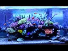 Mizune has a perfect little reef tank | Reef Builders