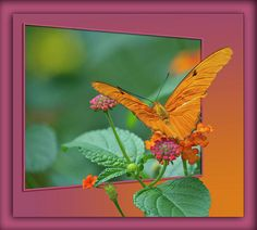 Butterfly.  From my eyes, through the view finder to the click of the shutter. I hope you enjoy these moments in time that have been captured. Stop by and check out some of my other Galleries on Fine Art America. Just simply search for Thomas Woolworth. Photographer (1977), Digital Artist and Owner V'CAD Support (since 1987). 