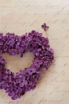 **lilacs