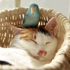 bird on cats head... love it!