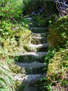 A stair with moss is beautiful! Let it grow!