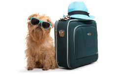 Traveling today is very common. Many Americans are traveling more and more every year. But having a reason for shipping a dog doesn't necessarily have to do with making an around the world trip. It can be something as similar as going out of town for a short visit at a friend's place. #dogtravel #traveltips #dogs #petsafety #canines #dog
