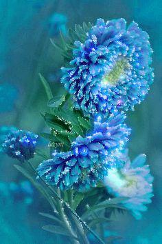 FLOWER LOVE---