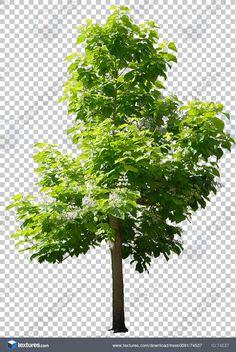 Textures.com - Trees0091