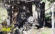 Image result for asat camo