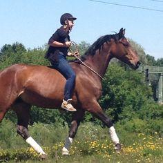 Reiten lernen, Reiten für Menschen mit Behinderung, Einsteller, Kinder-Pony-Spielstunde, Kinderferiencamp, Ausritte, Kindercamp, Ferienbetreuung, Pferde, Reiten, München,