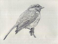 bird sketch m. lewandowski