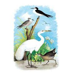 55 Bird Artists Jasper Theodore Ideas Bird Artists Theodore Bird