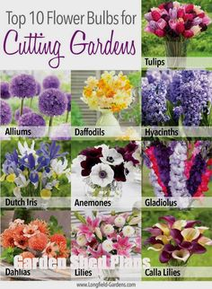 If you love making fresh flower arrangements, planting a cutting garden is the best way to ensure you always have an abundance of beautiful, homegrown flowers on hand. Full post here: www. - My Sunny Gardens Cut Flower Garden, Flower Farm, Flower Beds, Cut Garden, Flower Gardening, Flowers For Cutting Garden, Flower Garden Plans, Flower Garden Design, Flower Diy