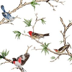Villa Fiori wallpaper by Gaston Y Daniela from their Dos Papel Pintado collection. A wallpaper showing fine drawings of colourful birds perched on branches on a white background. A stunning feature wall wallpaper available to buy online. Gaston Y Daniela, Bird On Branch, White Wallpaper, Bathroom Wallpaper, Animal Wallpaper, Colorful Wallpaper, Fabric Houses, Wallpaper Online, Bird Design