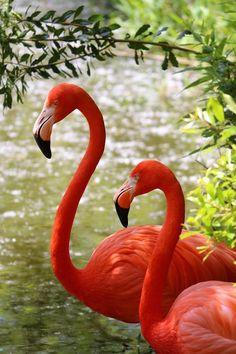 Foto Flamingo, Flamingo Art, Pink Flamingos, Pretty Birds, Love Birds, Beautiful Birds, Animals Beautiful, Exotic Birds, Colorful Birds