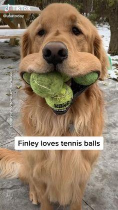 #catdog #cuteanimals #funnyanimals #animals #cat #dog #fordogs #forcats #foranimals #funny #viral