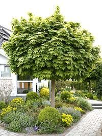 House trees for small gardens - Small Front Yard Garden Front Yard Patio, Front Yard Landscaping, Patio Plants, Garden Plants, Garden Projects, Garden Tools, Patio Interior, Small Garden Design, Garden Cottage