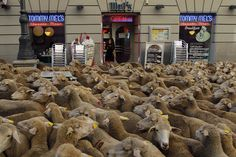 A waitress watched from a restaurant door as shepherds, not shown, led their sheep through the center of Madrid on Oct. 6 in defense of anci...