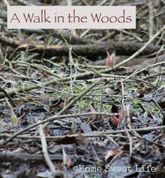 Home Sweet Life: A Walk in the Woods ~ Bundle up, take a walk, and get yourself out into the woods soon.