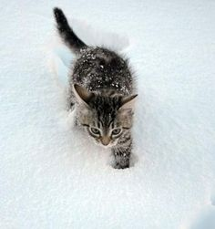 stupid, stupid snow!