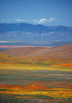 Poppy Fields, Antelope Valley