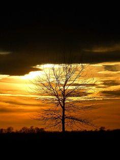 Mesmerizing Delta sunset