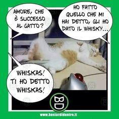 Nooooooo......Che è successo al #gatto ? #bastardidentro #cibo…