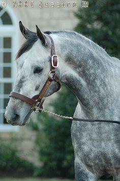 Giacomo 2005 Kentucky Derby Winner