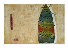 Untitled (moth) by Japanese artist Fumiko Toda. Print. via the artist's site