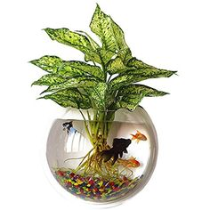 Wall Fish Bubble Wall Hanging Bowl Clear Acrylic Vase Flower Plant Pot Aquarium by Outgeek - Easy to Install: This wall fish tank has a small hole on the top, and will also come with a small wall. Plants Grown In Water, Water Plants Indoor, Potted Plants, Planted Aquarium, Aquarium Aquascape, Aquarium Fish, House Plants Decor, Plant Decor, Flower Vases
