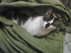 Lost gatinho amor