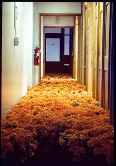 Bloom by Anna Schuleit, Memorial installation for the closing of the Massachusetts Mental Health Center. Instalation Art, Mental Health Center, Flower Installation, All Flowers, Potted Flowers, Indoor Flowers, Yellow Flowers, Beautiful Flowers, Anna