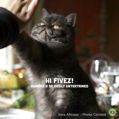 Funny Cat Picture!