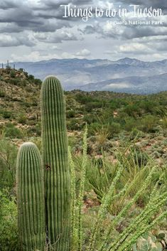 Weekend Explorations: Things to do in Tucson Things to do in Tucson Arizona (USA). Things to do in t Visit Arizona, Arizona Travel, Arizona Usa, Tucson Arizona, Backpacking Europe, Europe Packing, Traveling Europe, Packing Lists, Travel Packing
