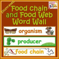 An easy to remember both the spellings and meanings of the key food chain and food web terms. #science $